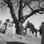 """""""~Tree~"""" by iawildflwr"""