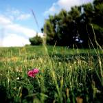 """Meadow, Biarritz, France, 2008"" by terynrobinson"