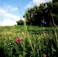 Meadow, Biarritz, France, 2008