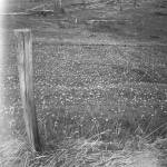 """Fence & Meadow, Alberta, Canada, 2009"" by terynrobinson"