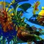 """sunflowers composite"" by pixelviz"