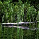 """""""Floating log"""" by Beckerphotos"""
