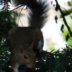 """Squirrel"" by rajagopal_14"