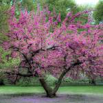 """Central Park in Bloom"" by PaulGaitherPhotography"
