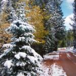 """ChristmasTree"" by iThinkMedia"