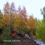 """ColoradoFallColor"" by iThinkMedia"