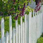"""Lilacs and Fence"" by cinsings"