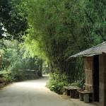 """bamboo groves everywhere"" by kaishin"