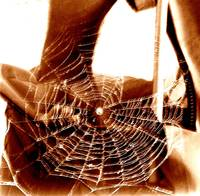 A Tangled Web We Weave