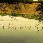 """""""Pretty Flamingos"""" by namit"""
