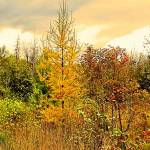 """NorthernMaineAutumn028"" by nmpics"