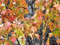 NorthernMaineAutumn034