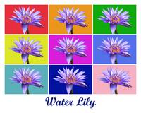 Water Lily x9 (Titled)