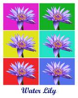 Water Lily x6 (Titled)