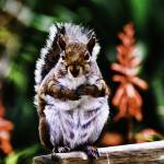 """Squirrel on Park Bench"" by johncorney"
