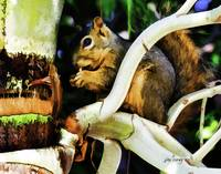 Squirrel Eating in a Palm Tree