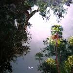 """Palm Tree Moonlight"" by mazz"