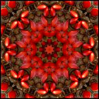 Red Kaleidoscope #1