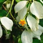 """Tiny Flower in its glory"" by wiresurfer"