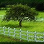 """Greener pastures copy"" by Spinbird"