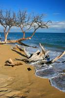 Driftwood Beach Hawaii