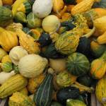 """Decorative gourds"" by bluejean"