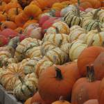 """Gourds and Pumpkins"" by bluejean"