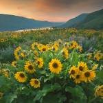 """""""108_RowenaSunrise_ColumbiaGorge_OR"""" by kevinmcneal30"""