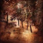 """""""Trees"""" by cattanphoto"""