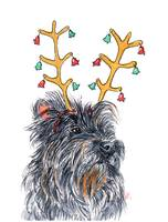 Holiday Cairn Terrier