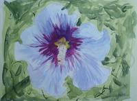 Blue and Purple Hibiscus