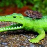 """Croc & Toad"" by cameras4kids"