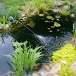 """A Pond in Miniature"" by Artlife"