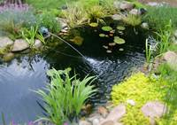 A Pond in Miniature