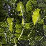 """COLLARDS AND MUSTARD GREENS"" by smallbizvisuals"