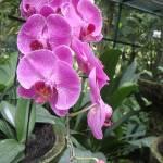 """""""Singapore - Botanical Garden"""" by kasiahein"""