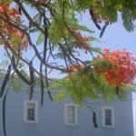 """Honeymoon - Grand Cayman"" by kasiahein"