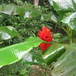 """""""Botanical Garden"""" by kasiahein"""