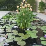 """Longwood Gardens"" by kasiahein"
