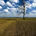 """Missouri Field"" by brandonpaulwatts"