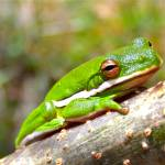 """Little Green Frog"" by cameras4kids"