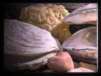 ** oyster bay.. bella, oyster shell...