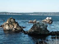 Cannary Point Point Lobos 2008