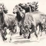 """""""Mustangs of Las Colinas"""" by DBCArtwork"""