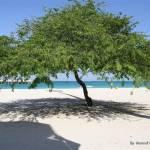 """""""Kish Island Beach"""" by Maneef"""