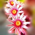"""back garden flowers"" by clickdecourcyNI"