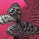 """""""BUTTERFLY"""" by AES"""