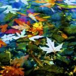 """""""rocks-water-leaves-sky"""" by lakewentworth"""