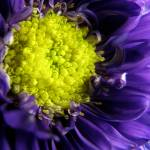 """Purple Gaze"" by Kucci"