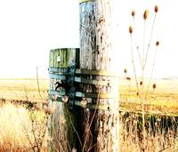 Poles and Thistles